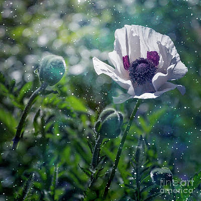 Photograph - Garden Beauty by Agnieszka Mlicka
