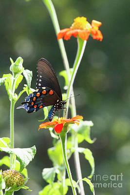 Photograph - Garden Beauty by David Cutts