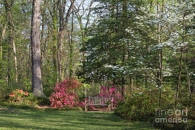 Photograph - Garden Bench 1 by Chris Scroggins