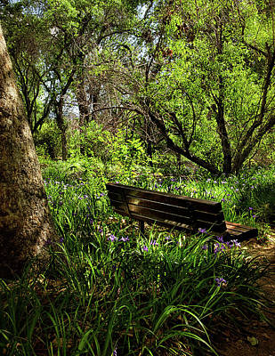 Photograph - Garden Bench by Camille Lopez