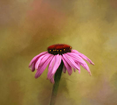 Photograph - Garden Bliss by Kim Hojnacki