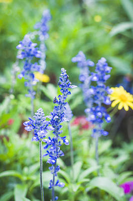 Photograph - Garden Blues by Christi Kraft
