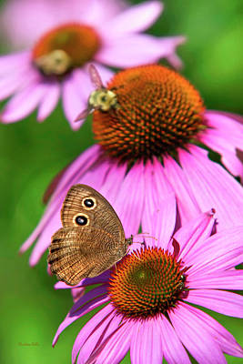 Rollos Photograph - Garden Butterfly by Christina Rollo