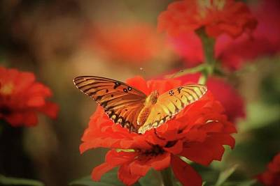 Photograph - Garden Butterfly by Donna G Smith