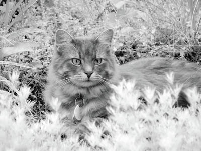 Photograph - Garden Cat - Charlie - Black And White by MTBobbins Photography