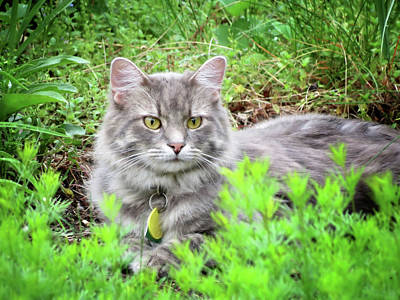 Photograph - Garden Cat - Charlie by MTBobbins Photography