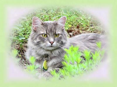 Photograph - Garden Cat - Charlie - Vignette by MTBobbins Photography