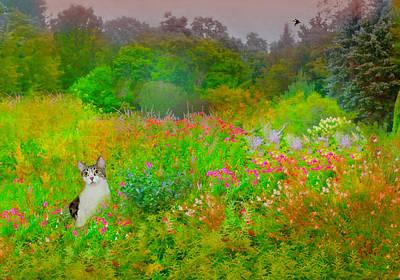 Photograph - Garden Cat by Diana Angstadt