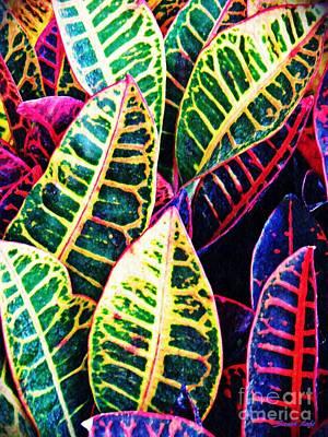 Photograph - Garden Croton 2 by Sarah Loft