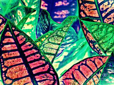 Photograph - Garden Croton 3 Color Inversion by Sarah Loft