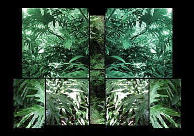 Photograph - Garden by Daniel Schubarth