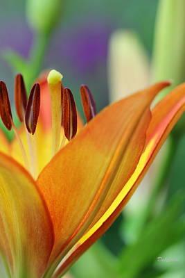 Photograph - Garden Delight by Deborah  Crew-Johnson