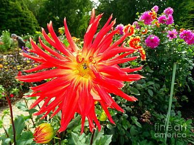 Photograph - Garden Delight by Ed Weidman