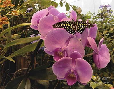 Photograph - Garden Delight by Joann Long