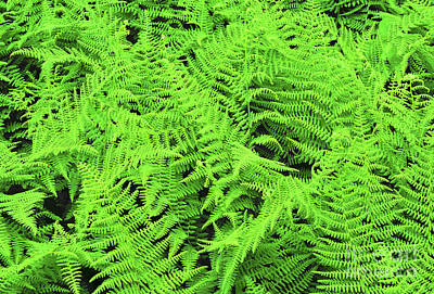 Royalty-Free and Rights-Managed Images - Garden Fern Semi-Abstract by Regina Geoghan