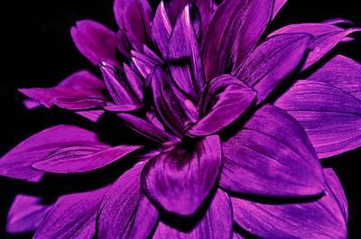 Purple Flowers Photograph - Garden Flower At Night by Michelle McPhillips