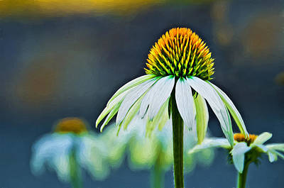 Photograph - Bristle Flower by Maria Coulson