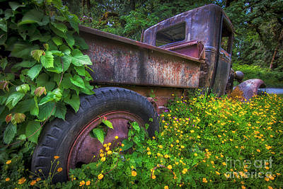 Photograph - Garden Ford by Sonya Lang