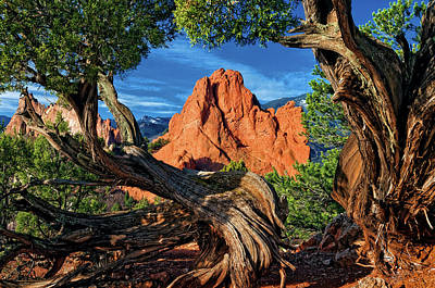 Photograph - Garden Framed By Twisted Juniper Trees-2 by John Hoffman