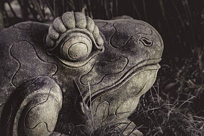 Photograph - Garden Frog by Andy Crawford