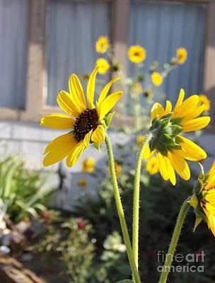 Photograph - Garden Gals by L Cecka