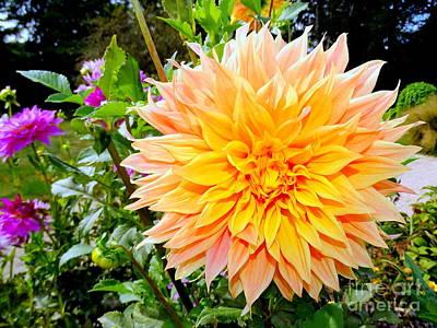 Photograph - Garden Glory 2 by Ed Weidman