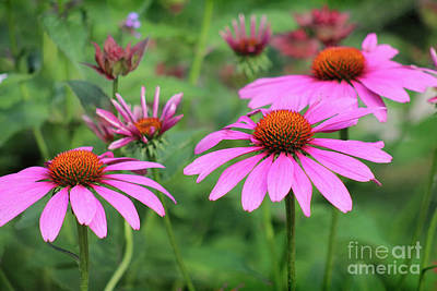 Photograph - Garden Glory by Karen Adams