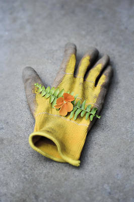 Garden Glove And Pansy Blossom2 Art Print