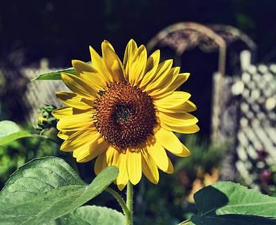 Photograph - Garden Grandeur by JAMART Photography