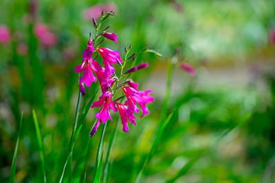 Photograph - Garden Greeting by Derek Dean