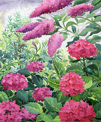 Hydrangea Watercolor Painting - Garden Hydrangeas And Buddleia by Christopher Ryland