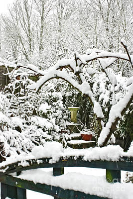 Photograph - Garden In The Snow by Terri Waters
