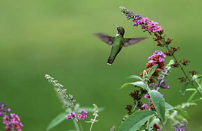 Photograph - Garden Jewel by Debbie Oppermann