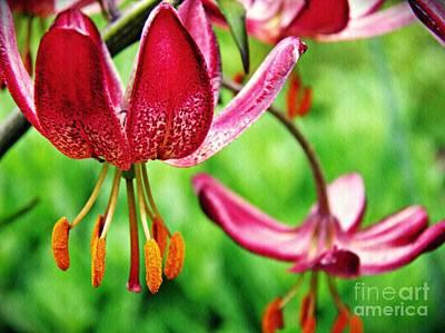 Photograph - Garden Jewels 1 by Sarah Loft