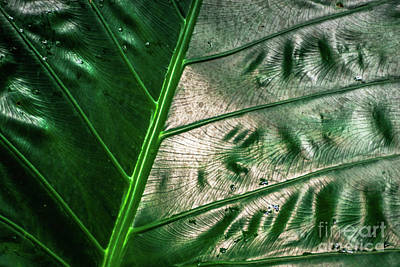 Photograph - Garden Jungle Leaf Kauai Hawaii by Blake Webster