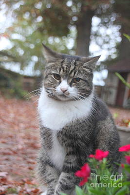 Photograph - Garden Kitty 6 by Wendy Coulson