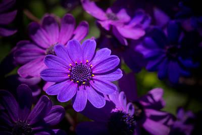 Photograph - Garden Light by Derek Dean
