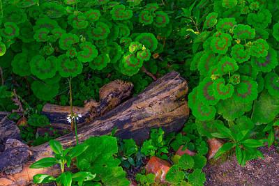 Photograph - Garden Logs by Derek Dean