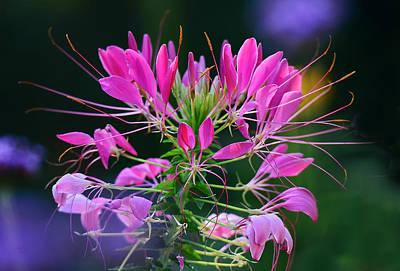 Photograph - Garden Magic by Rodney Campbell
