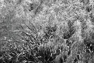 Photograph - Garden Marsh In Black And White by Jeanette C Landstrom