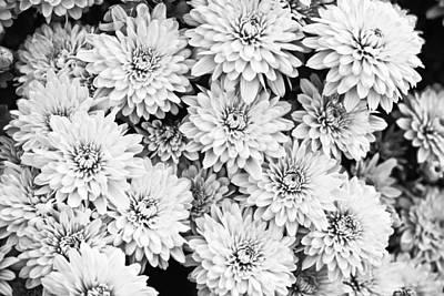 Garden Mums Art Print