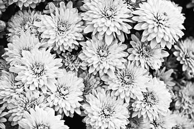Garden Mums Art Print by Ryan Kelly