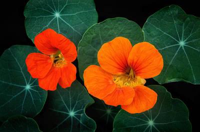 Photograph - Garden Nasturtium by Carolyn Derstine