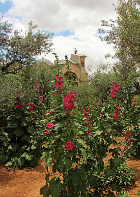 Photograph - Garden Of Gethsemane Flowers by Munir Alawi