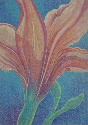 Day Lily Drawing - Garden Of Lily's , Garden Of Your Soul by Terri Melia - Hamlin