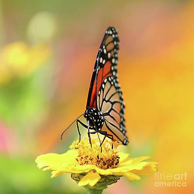 Photograph - Garden Of Summer by Darren Fisher