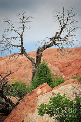 Photograph - Garden Of The Gods by Richard Smith