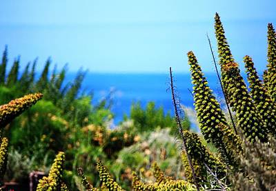 Photograph - Garden Overlook To Pacific Ocean by Matt Harang