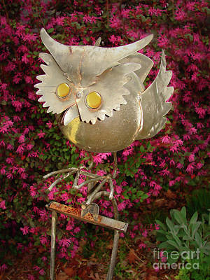 Photograph - Garden Owl by Laura Brightwood