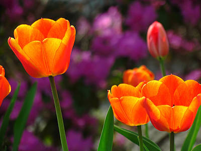 Tulip Photograph - Garden Party by Juergen Roth